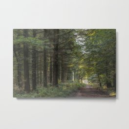 Along the Forest Track Metal Print