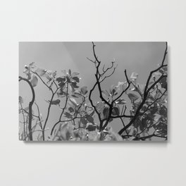 Branches in the Sky, California  Metal Print