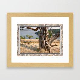 OLD JUNIPER AT BURROWS PASS ANACORTES Framed Art Print