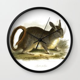 Lagotis pallipes,' chinchilla, drawn and engraved by Edward Lear. Wall Clock