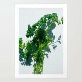Herbal Art Print