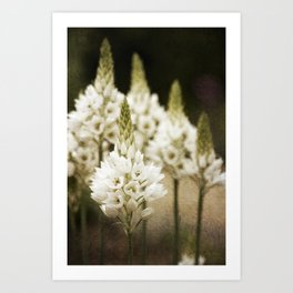 Candle Flowers Art Print