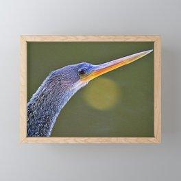 The Anhinga Eye II Framed Mini Art Print