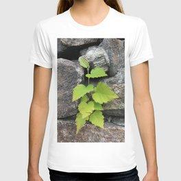 Little plant T-shirt
