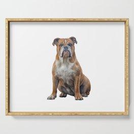 Drawing dog breed English Bulldog Serving Tray