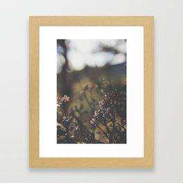 Colorado Mountain Life Framed Art Print