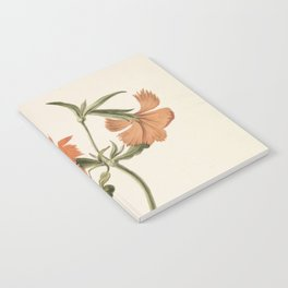M. de Gijselaar - Yellow Chinese rose (1820) Notebook