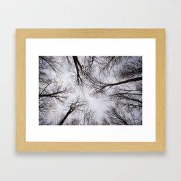 Moody Forest Framed Art Print