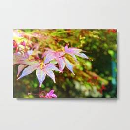 Maroon Leaves - Japanese Maple Metal Print