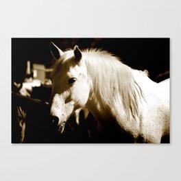 White Horse-Sepia Canvas Print