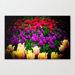 Tulip Festival in Woodburn, Oregon, 6 Canvas Print