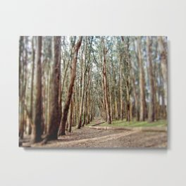 Eucalyptus Tree Forest Pathway Metal Print