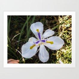 A Bloomed Flower Art Print