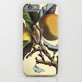 Vintage Apples iPhone Case