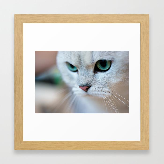 British Shorthair Silver Shaded Chinchilla Cat Framed Art Print By Skleznev Society6