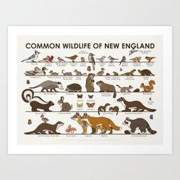 Common Wildlife of New England Art Print