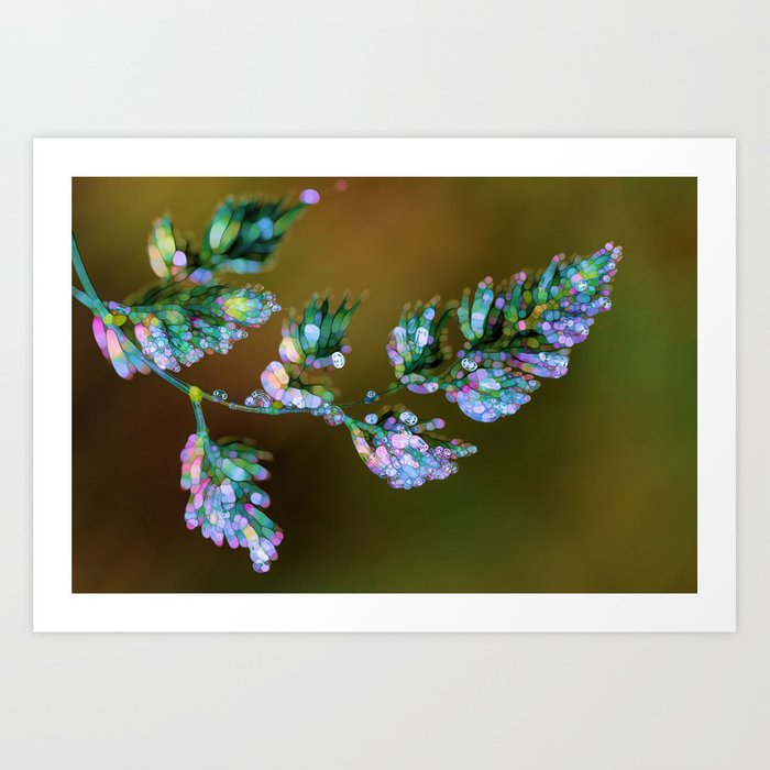 Tropical, feathers and dew Art Print