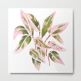 Triostar Stromanthe Watercolour Pink Leaves  Metal Print