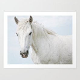 Pale Horse - Nature Photography Art Print