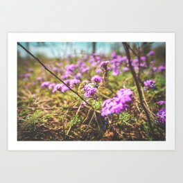Savannah Flowers Art Print