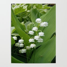 Pure White Lily of the Valley Flower Macro Photograph Poster
