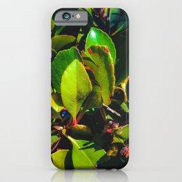 closeup green leaves garden texture background iPhone Case