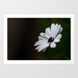 Flower Photography by Marc-Olivier Jodoin Art Print