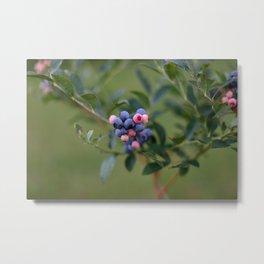 Summer Blueberries Metal Print