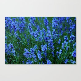 Glowing Blue Floral Canvas Print