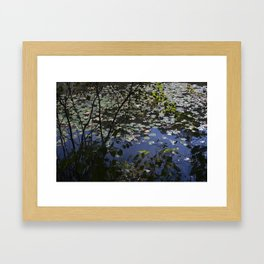 Lotus Flowers and Reflections Framed Art Print