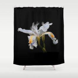 Elegant Iris Japonica / Fringed Iris Flower Shower Curtain