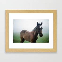 Colt Framed Art Print
