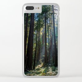 Red Woods & Sun Rays Clear iPhone Case