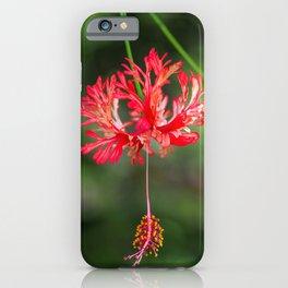 Hibiscus schizopetalus iPhone Case