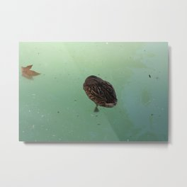 Peaceful Afternoon Siesta - duck napping on the water Metal Print