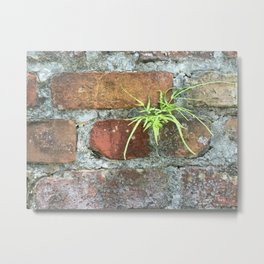 New Life in a Wall, New Orleans Metal Print