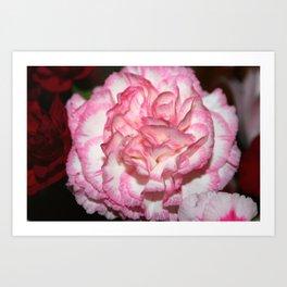Carnation Creation Art Print