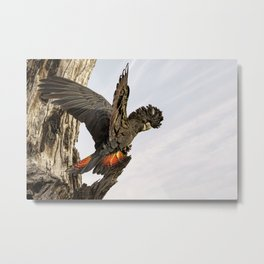 Female Red-tailed Black-cockatoo on tree branch Metal Print