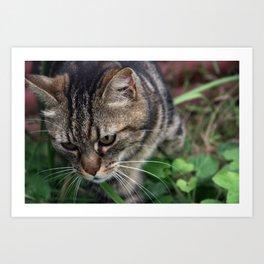 Outgoing cat 085 Art Print