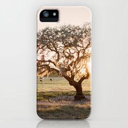 Lone Oak at Golden Hour / Florida Fine Art Film Photography iPhone Case