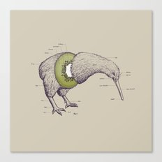 Kiwi Anatomy Canvas Print
