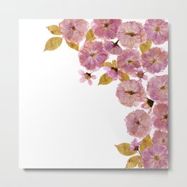 Dried And Pressed Cherryblossoms Frame  Metal Print