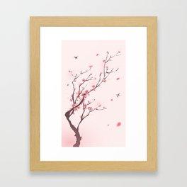 Oriental cherry blossom in spring 003 Framed Art Print