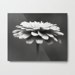 Black and White Flower Photography, Zinnia Floral Photograph, Neutral Nature Photo, Modern Botanical Metal Print