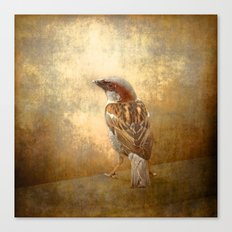 The little brown sparrow Canvas Print