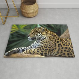 Elegant Noble Adult Jungle Leopard Lying Down In Habitat Close Up Ultra HD Rug