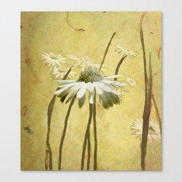 Portrait of Daisies Canvas Print