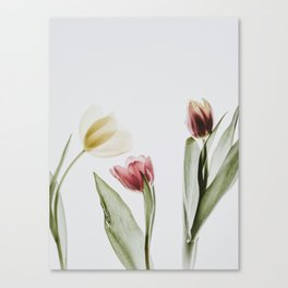 Tulip, Flower, Nature, Modern art, Minimal, Wall art Print Canvas Print