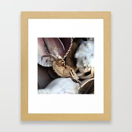 Crabe &Coquillages Framed Art Print
