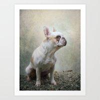 french bulldog Art Prints featuring French bulldog  by Pauline Fowler ( Polly470 )